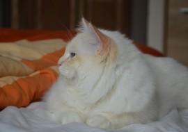 Quinou (57)