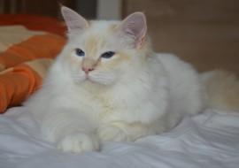 Quinou (58)