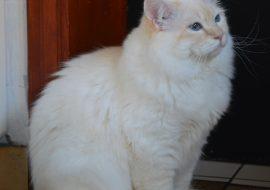 Quinou (71)