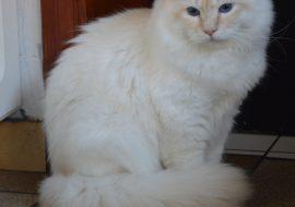 Quinou (72)